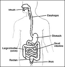 Gas in the Digestive Tract